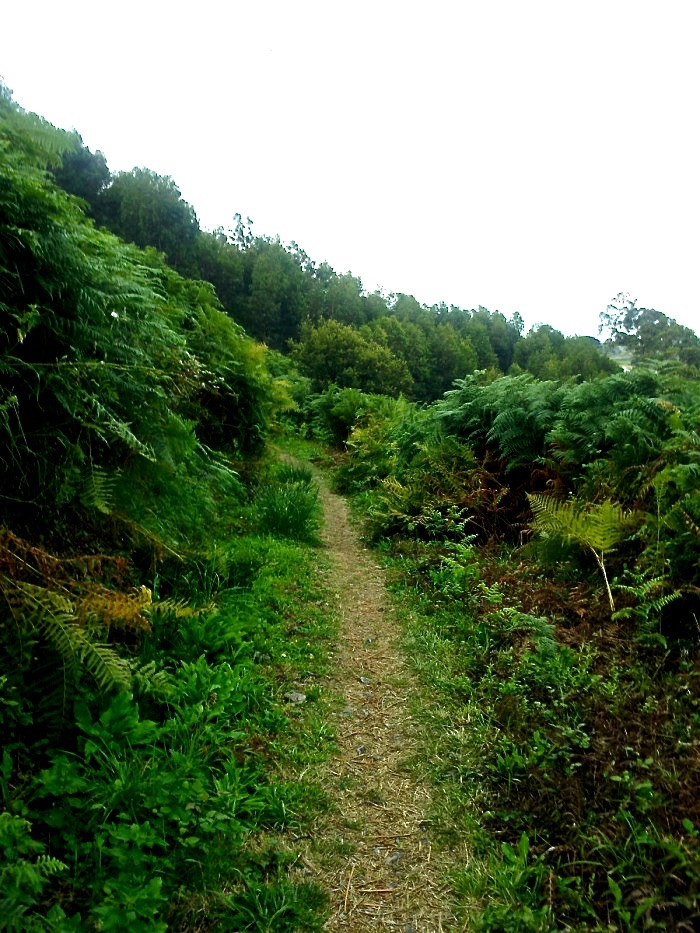 Track to La Isla