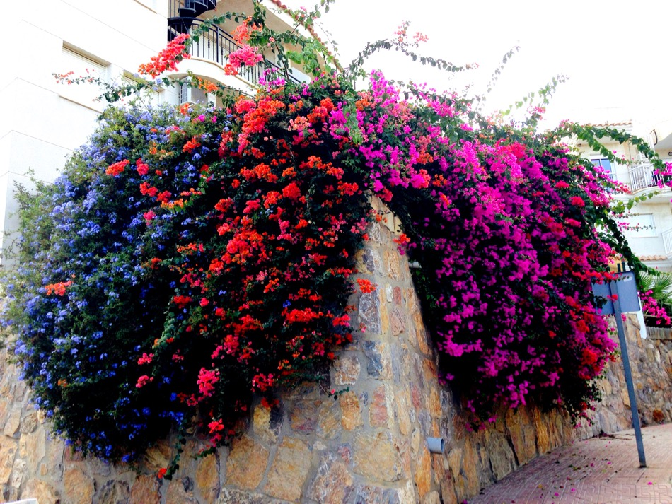 Colourful Corner of Los Collados