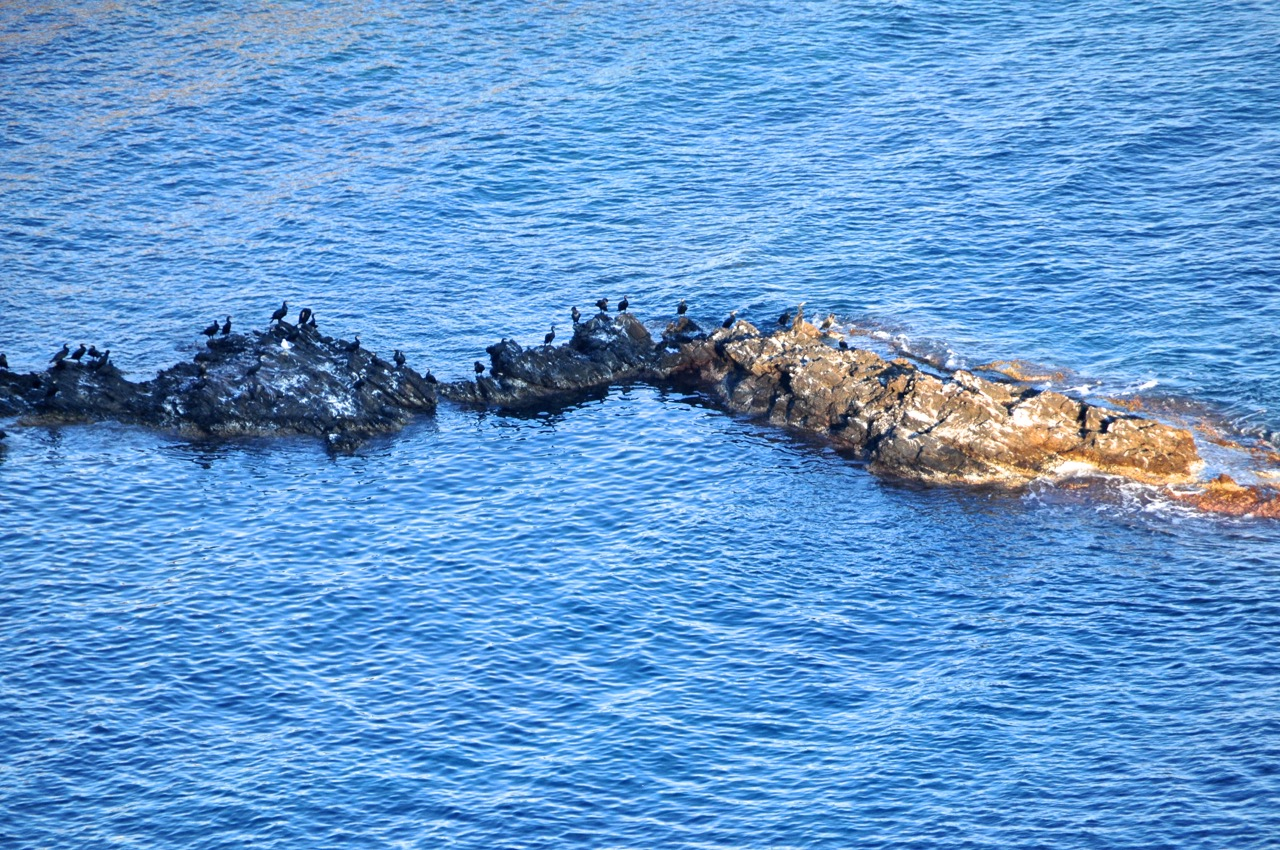 Seabirds on a sea islands