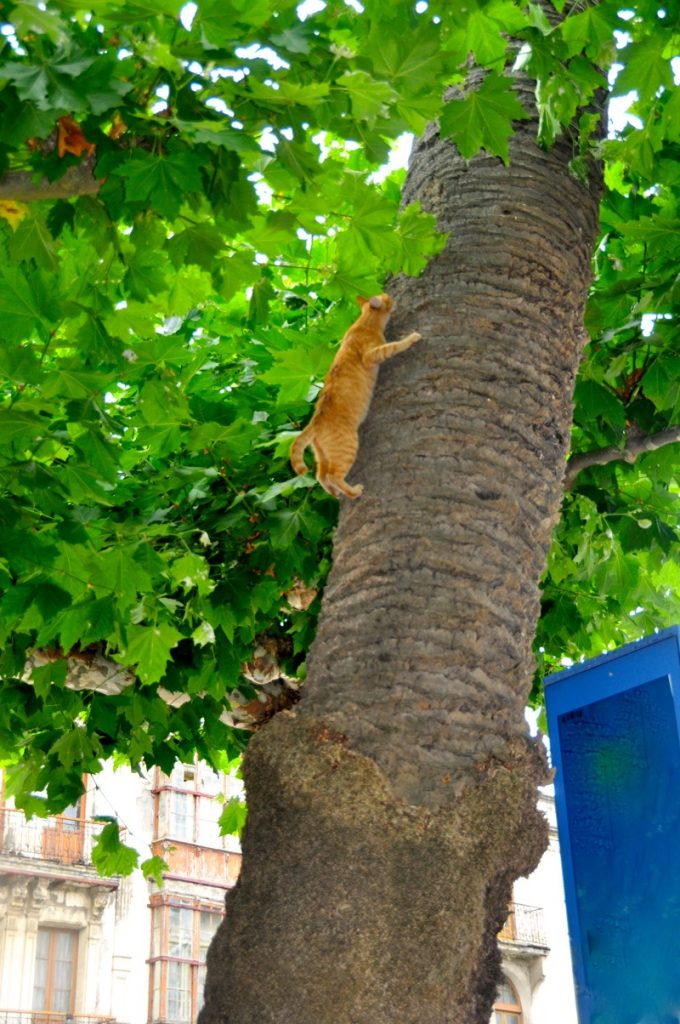 Cat up the Tree 1