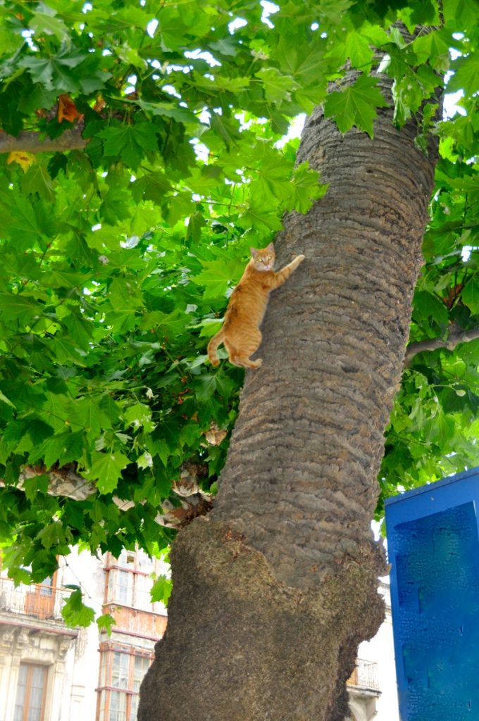 Cat up the tree 2