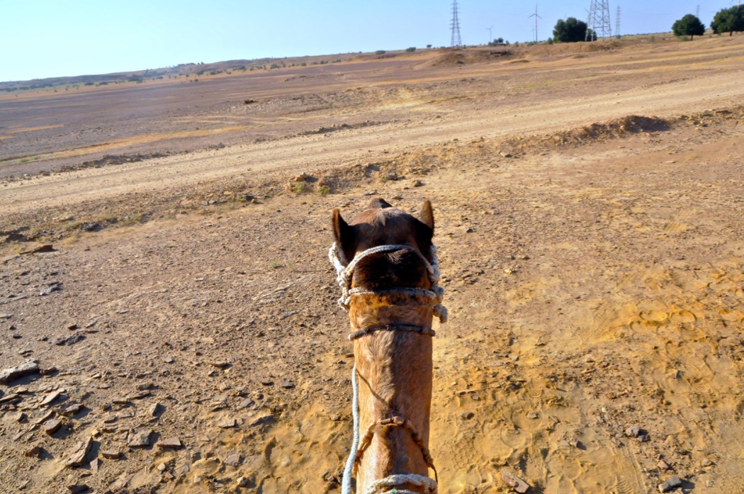 Camel 's View