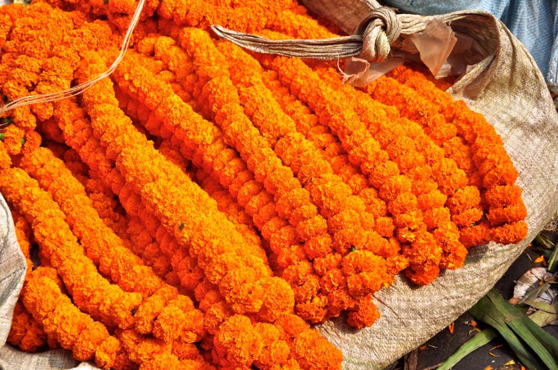Marigolds Kolkata