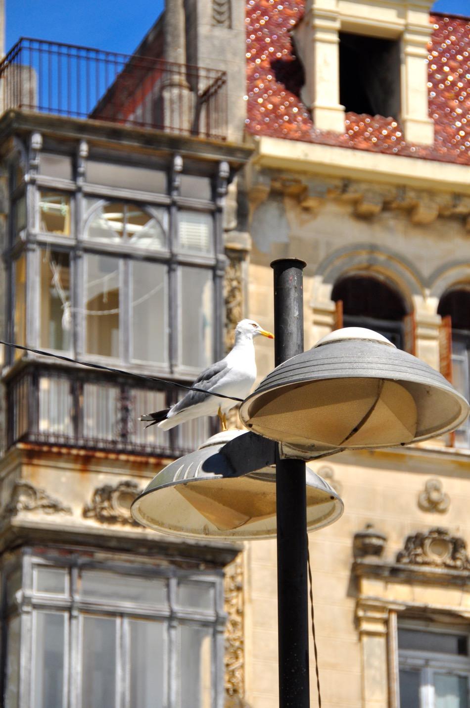 Ribadeo Seagull