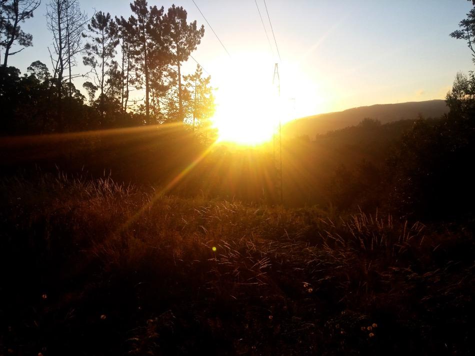The Enchanted Forest Sunrise