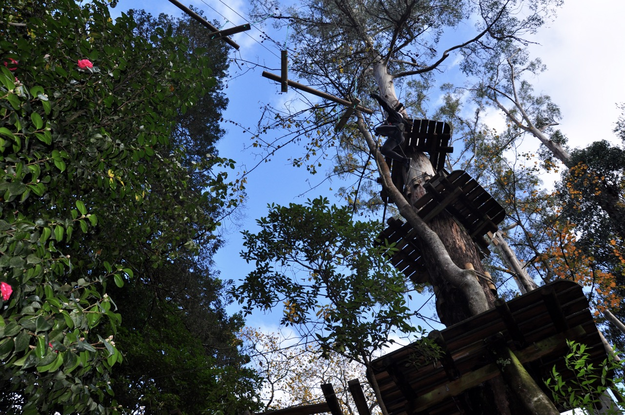 Treetops 2