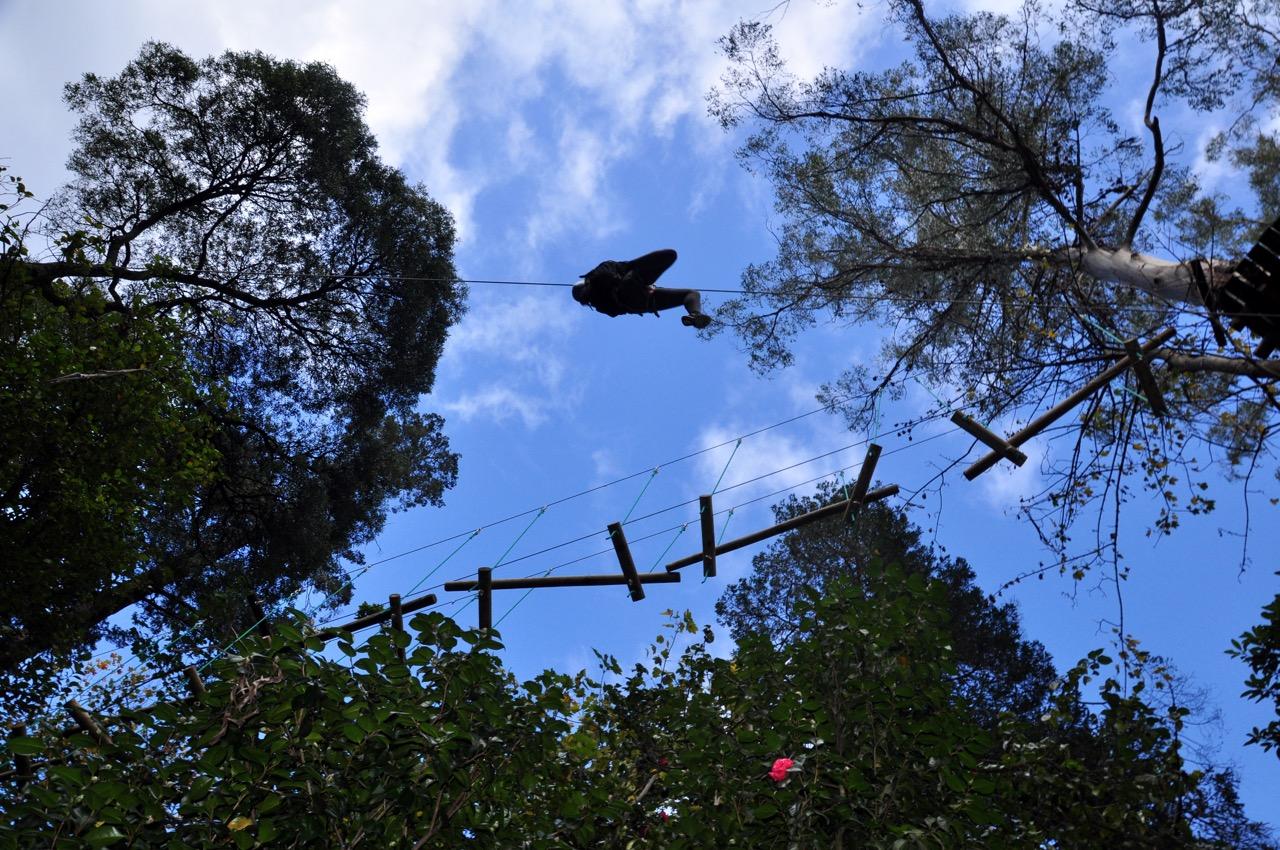 Treetops 3
