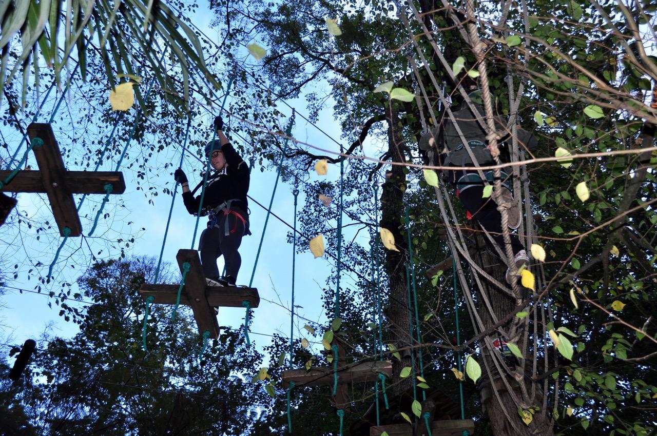 Treetops 7