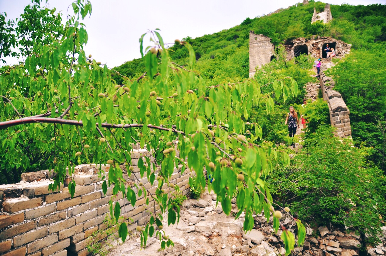 Fruit Trees on the Great wall