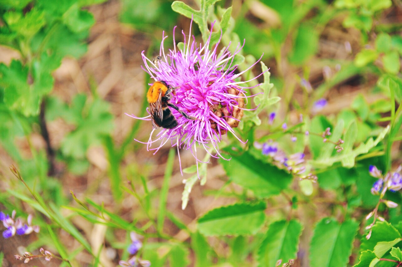 Flower and Bee on Great Wall Hiking