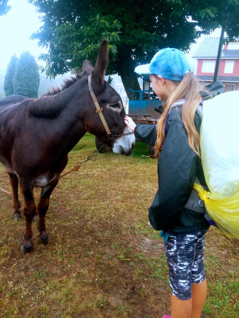 Reka encounter with a donkey