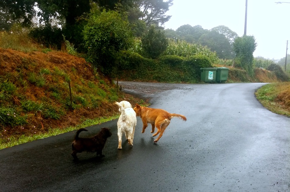 Buddies on the Camino