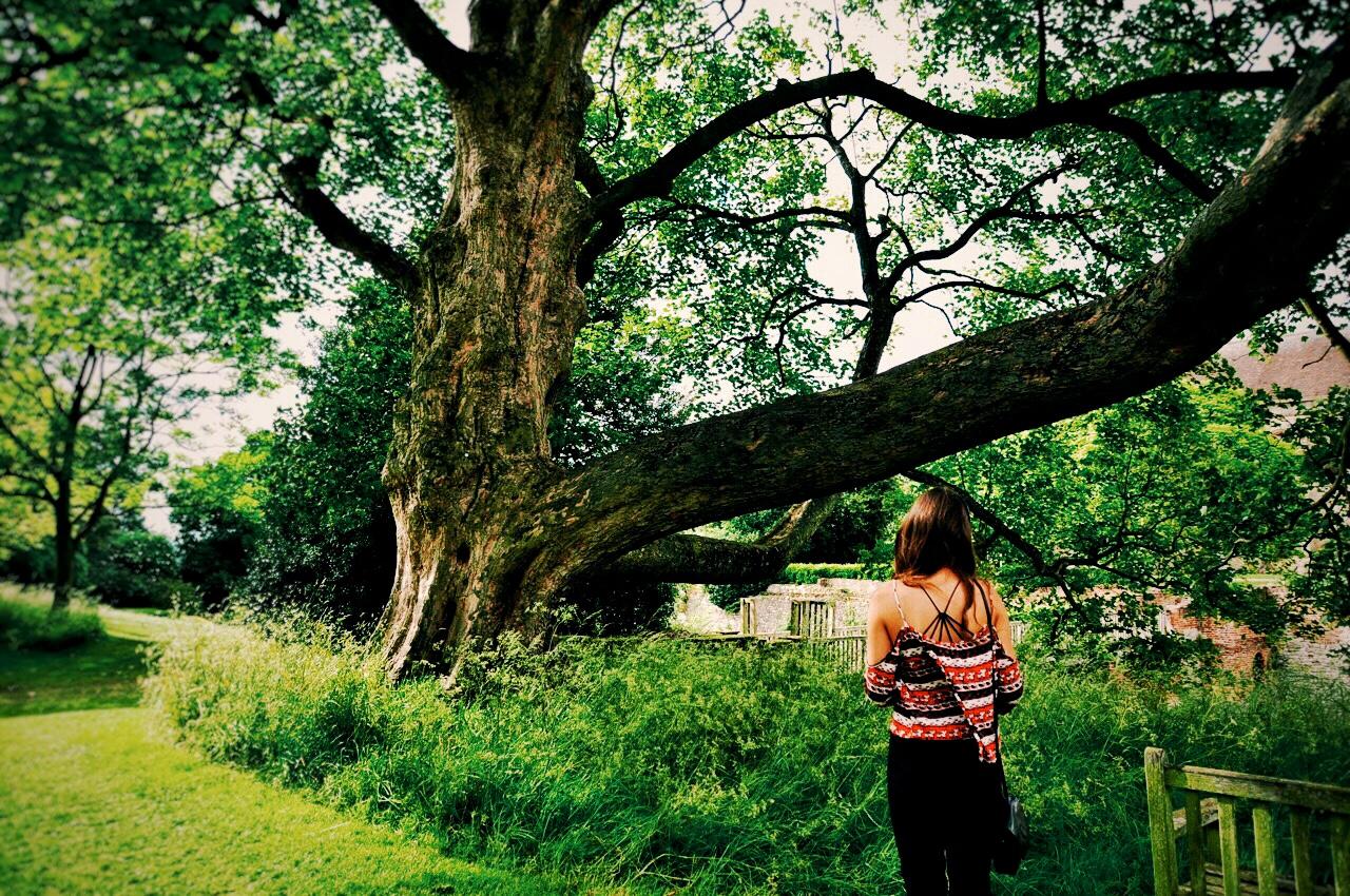 eltham-palace-gardens-tree