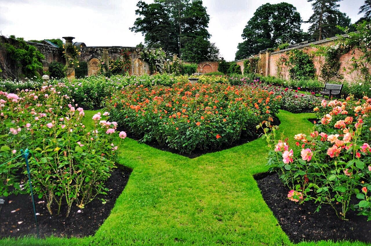 hever-castles-rose-garden