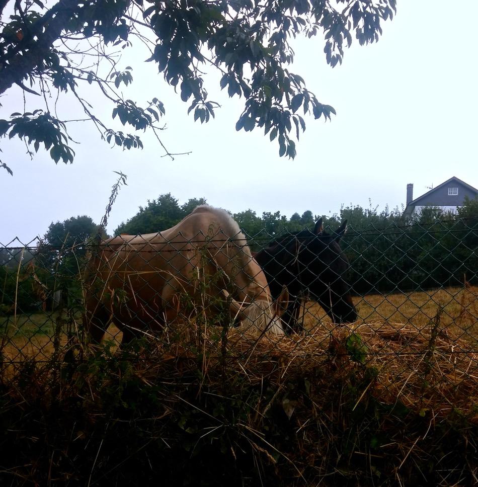 Horses along the Camino